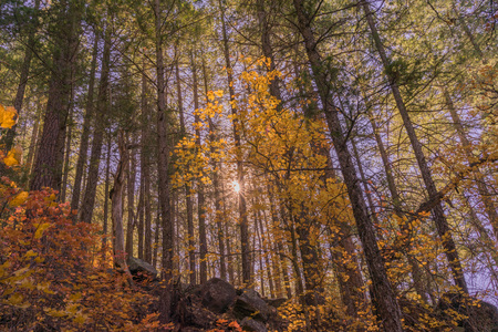 Landscape of a sunburst shining through the autumn leaves.