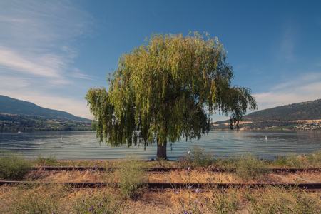 weeping willow: Landscape of train tracks in front of a weeping willow at Wood Lake, Oyama, British Columbia.