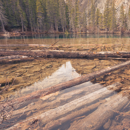 Landscape of Grassi Lake with deadwood in the water and forest in the background, Kananaskis, Alberta.
