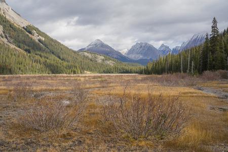 Earth toned landscape of the meadow of Burstall Pass, Kananaskis, Alberta. Stock Photo