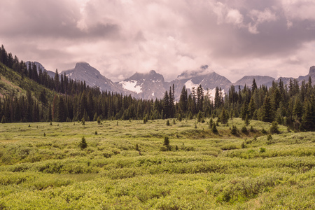 Landscape of a green meadow with a forest and mountain range in the foreground, Kananaskis, Alberta. Stock Photo