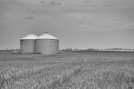 Landscape of two grain silos in a field with track leading through the center.