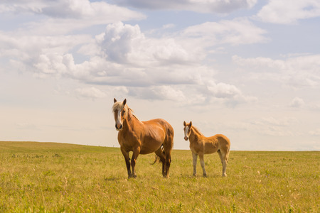 Brown mare and foal standing in a green pasture under a cloudy sky. Reklamní fotografie