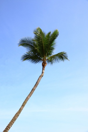Top of coconut in blue sky.