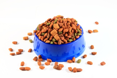 Dry cat food in blue plastic bowl