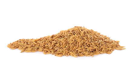 Pile of dry paddy grain unmilled rice.
