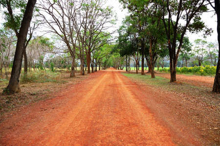 Rural red way to sparse tropical forest.