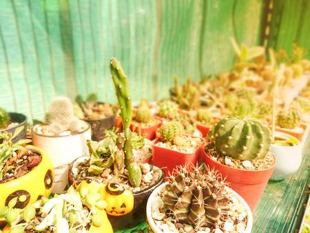 Beautiful cactus in a pot Stock Photo