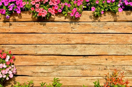 wooden fence background with red and pink flower photo