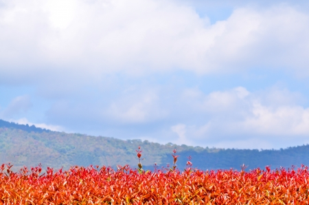 Red   orange leaves against the blue sky Stock Photo - 18842407