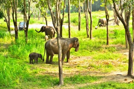 baby elephant and its mama walking