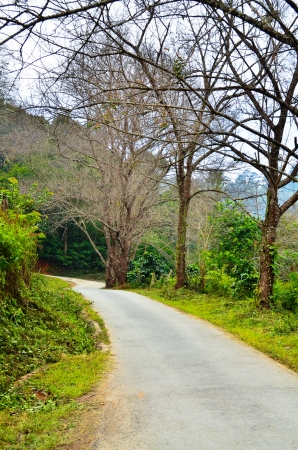 on both sides: Countryside road with trees on both sides. Stock Photo
