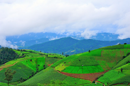 Fresh terrace rice field over the mountain range and beautiful sunset photo