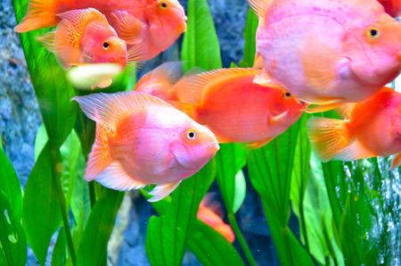 Closeup of beautiful Sea Fish In fish tank photo