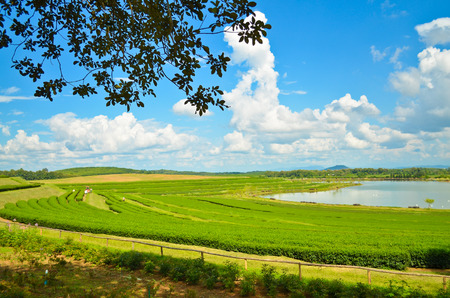 Tea plantations in the morning at Thailand Stock Photo