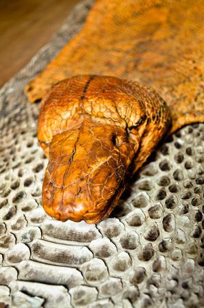 boa snake head close up photo
