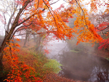 miracle tree: japan autumn tree background - Stock Image