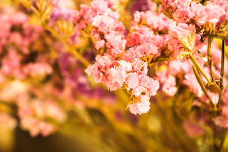 things that go together: Fresh flowers still life - Stock Image