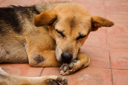 Brown and black homeless Thai dog sleep on the side street