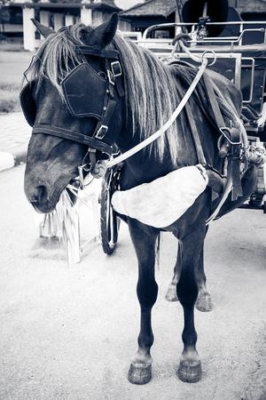 cinderella: horse fairy tale carriage cabin