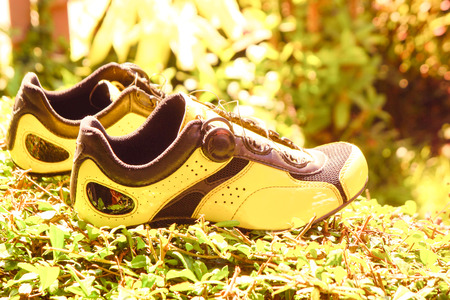 The yellow shoe standing on plant, Beautiful shoe on still nature background.