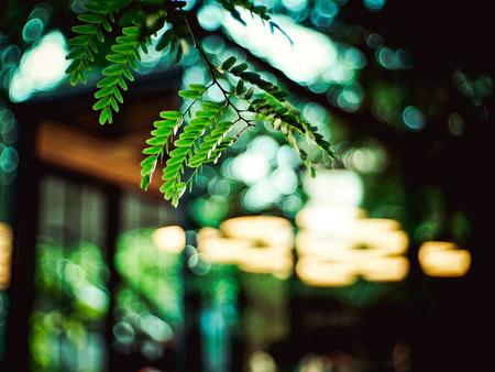 little leaf with blury background