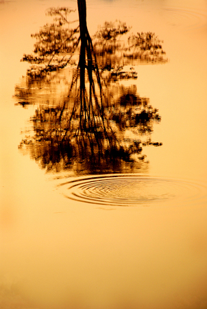 Trees Silhouette with Reflection in Water Stock Photo