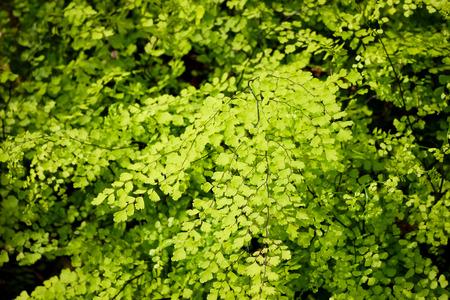 Little fern detail background