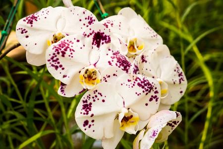 Beautiful Cymbidium orchid Stock Photo