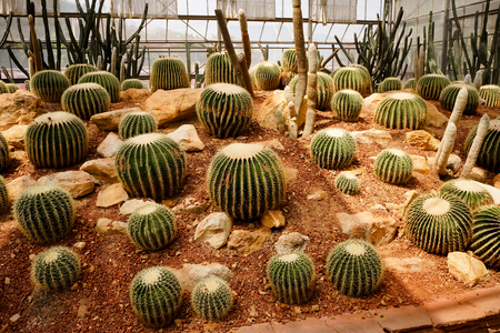 Cactus group in greenhouse Stock Photo