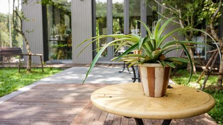 Chlorophytum in flowerpot on table. Stock Photo