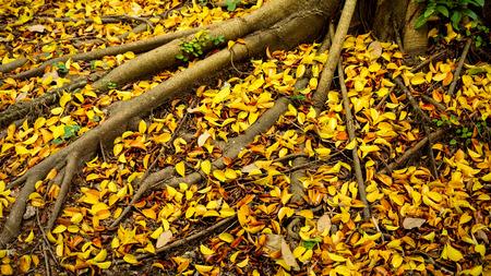 Autumn leaves under the autumn trees - autumn landscape