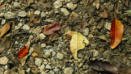 Closeup dirty stone floor with dried leaves texture background