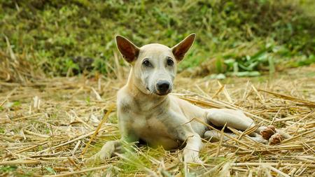 Little puppy in garden