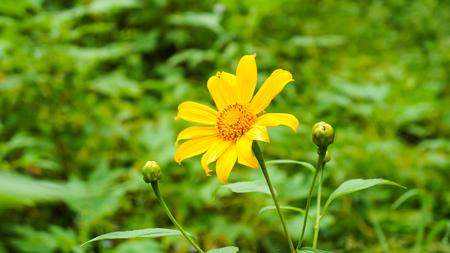 Wildflowers in Green Background