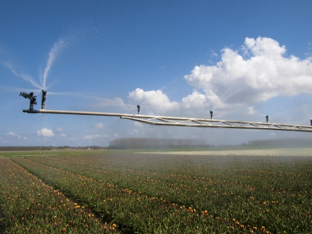 spray machine over a tulip field photo