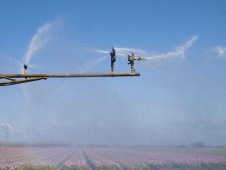 spray machine over a tulip field with a colorful rainbow photo
