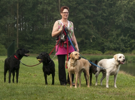 woman walks with four dogs on green grass photo