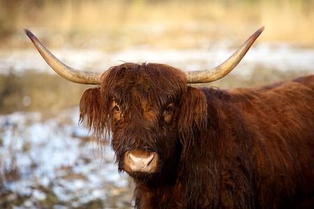highlander: highlander escoc�s