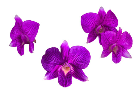 Purple orchid flower, isolated on white photo