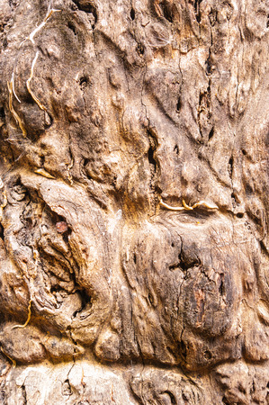 gnarled: gnarled tree root in close-up Stock Photo