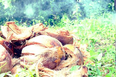 husk: c�scara de coco Foto de archivo