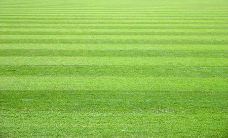 alternate: Green Grass