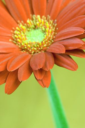 Orange Flower Stock Photo - 320323