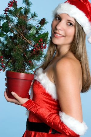 Mrs. Claus With Tree Stock Photo - 3641242