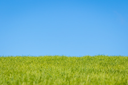 sky and grass: Blue sky and green grass