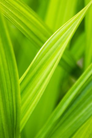 Closeup of green grass blades 版權商用圖片