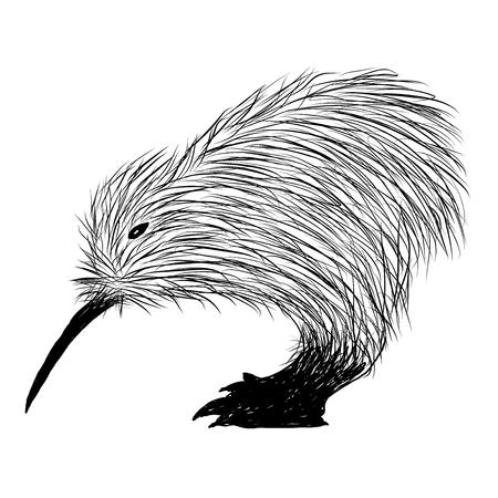 Sketch of kiwi bird vector illustration.
