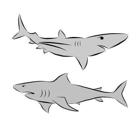 Sharks vector doodle illustration drawing Illustration
