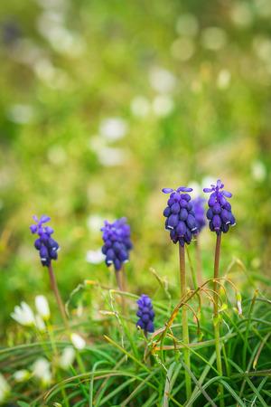 Beautiful purple flowers in green grass Stock Photo